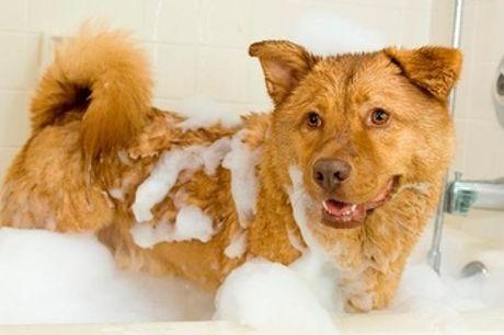 ¡10% Descuento en Peluquería + Baño para tu mascota en Chamartín!