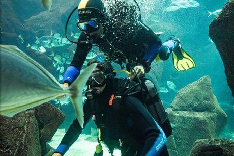 Nunca fez mergulho? Esta é a sua oportunidade! Mergulhe nas Piscinas Naturais de Porto Moniz e Aquário da Madeira. Pode viver esta experiência sozinho ou acompanhado. Atividade a partir de 35,90€.