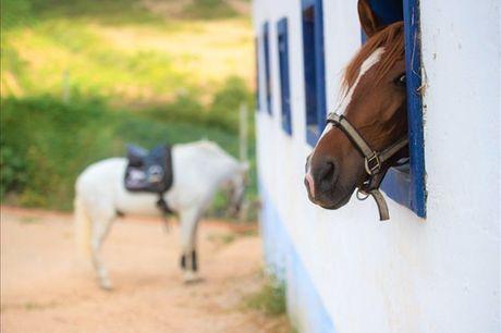 Um batismo cavalo é uma experiência inesquecível para qualquer pessoa. Se nunca teve este tipo de contacto com cavalos esta oferta é ideal para si. Aproveite esta atividade por apenas 20,90€.
