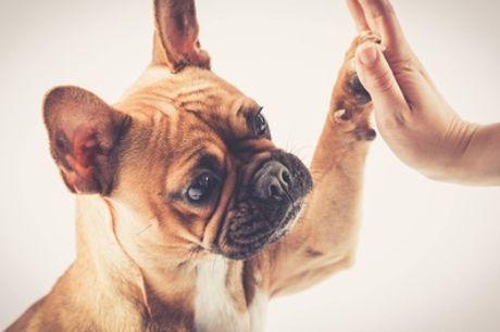 Huisdieren-fotoshoot incl. 1 óf 3 afdrukken en waardebon bij PicturePeople Fotostudios