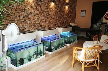 30 Min. Fisch-Spa-Pediküre inkl. Kaffee für 1 oder 2 Personen bei Siggis FishSpa (bis zu 46% sparen*)