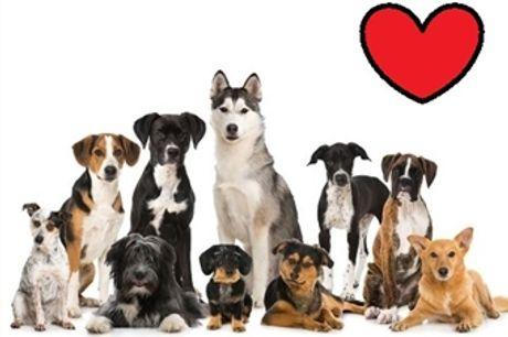 Curso Online de Cuidados e Procedimentos com Cães | Sociedade Digital | E-Learning 60 Dias por 23€. Cuide do Seu Amigo de 4 Patas.