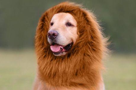 The Lion King Tover je hond om in een echte leeuw. Voor gemiddelde/grote honden. Leverbaar in verschillende kleuren