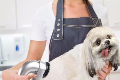 Honden & katten ontharingszuiger Speciaal ontworpen om je trouwe viervoeter op een makkelijke en pijnloze manier te kammen. Blijft niet hangen in de vacht. Pijnloos ontharen. Werkt op batterijen. Volledig geruisloos. Haren worden verzameld in de afvalbak