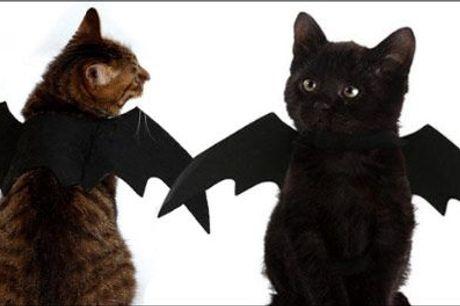 Nu bliver dit kæledyr helt sikkert midtpunkt til Halloweenfesten! - 1 stk. flagermuskostume til mindre kæledyr, værdi kr. 199,-