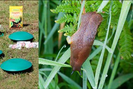 Ryd hele haven for dræbersnegle..  - Snail-buster dræbersnegle-fælder, 2, 4, 8 eller 12 inkl. fragt, værdi op til kr. 2499,-