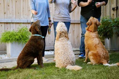 Chequeo y vacuna para mascotas con opción a  test de inmunodeficiencia o leucemia para gatos desde 19,99 € en Peluditos