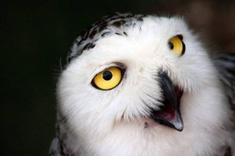 Two-Hour Owl Experience for One or Two at The North Somerset Bird of Prey Centre