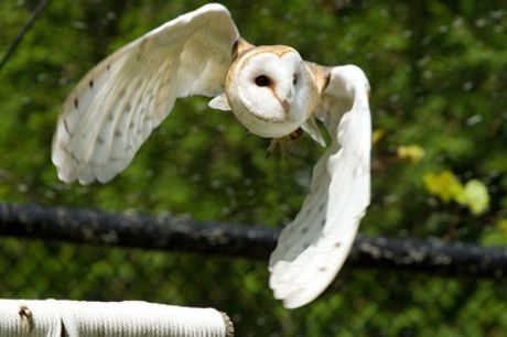 Three-Hour Ultimate Eagle or Owl Experience for One or Two at Birds of Prey Centre