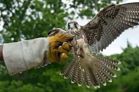 Three-Hour Raptor Encounter for One or Two at Birds of Prey Centre