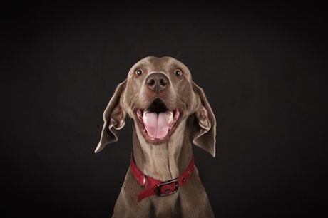 """One-Hour Pet Photoshoot with one 8"""" x 6"""" Print by Peter Thomas Photography"""