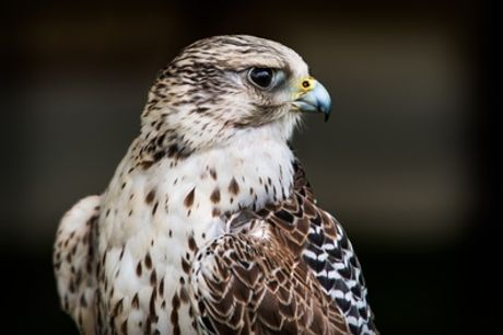 One-Hour Private Bird Handling Experience at Riverside Falconry