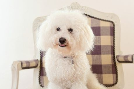 One-Hour Pet and Family Photoshoot with Seven Prints by CS Photo Studio