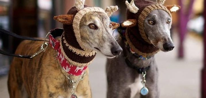 Greyhound Race Entry with Race Card, Burger and Drink for Two at Swindon Greyhounds (Up to 73% Off)