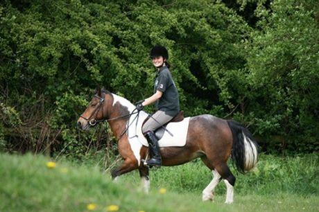 Trent Park Equestrian Centre: Intensive Four-Day Horse Riding Course