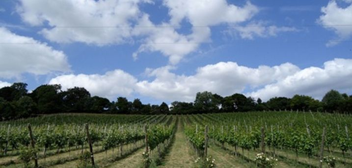 Daws Hill Vineyard Tour and Wine Tasting for Two or Four