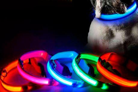 Farverige hundehalsbånd med LED-lys der lyser op i mørket