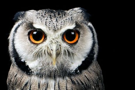 Meet The Animals Experience for Two at The North Somerset Bird of Prey Centre