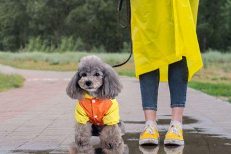 Enten-Regenmantel für Hunde. Niedlicher und stilvoll gestalteter Regenmantel für den besten Freund des Menschen. Wasserdichtes Material hält dein Hündchen bei nassem Wetter trocken. Mehrere Größen und verstellbare Bauchgurte sorgen für Sicherheit und Komf