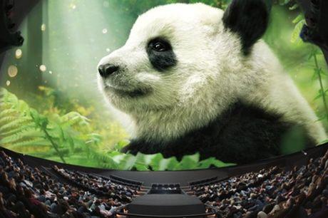 Omniversum: tickets voor een unieke filmbeleving bij het grootse grootbeeldfilmtheater in Den Haag