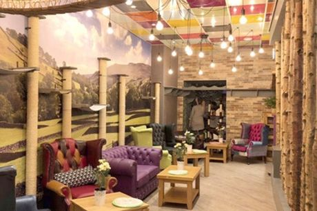 Cat Cafe Entry with Afternoon Tea for Two or Four at Kitty Cafe