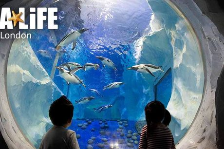 SEA LIFE London Aquarium. Discover a magical underwater world filled with extraordinary creatures at the SEA LIFE London Aquarium. With thousands of sea creatures, from rays to rare green sea turtles plus family-friendly, fact-filled talks throughout the