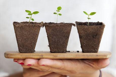Se quer aprender mais sobre a agricultura urbana e sobre como pode criar a sua própria horta urbana este curso é o ideal para si! Aqui irá aprender tudo o que precisa de saber para poder começar a cultivar os seus alimentos na sua varanda, terraço ou páti