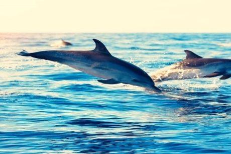 HOTEL DO SADO 4*: Estadia com Pequeno Almoço e Passeio para observação de Golfinhos.