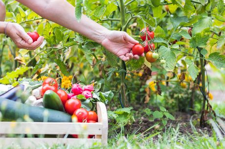 £9 instead of £29 for an online self-sufficient vegetable gardening course from Learning With Experts - save 69%