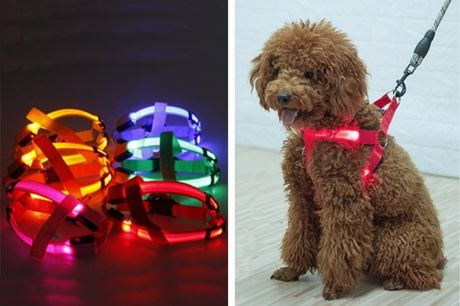 £5.99 instead of £19.99 for an led dog harness from YelloGoods - save 70%