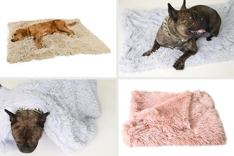 From £6.99 for a cat sleeping bed from Backtogoo - choose from seven colours