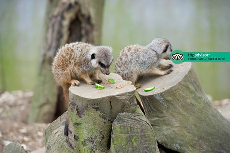 £25 for a 'meet the meerkat' experience and park entry for two people at Bridlington Birds of Prey and Animal Park
