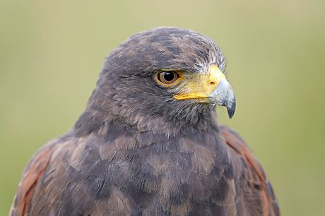£24.50 for a three-hour falconry experience for one at Adventure 001 - choose from six locations!
