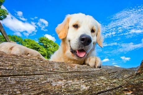 Two-Hour Dog Photography Experience with Wall Art Credit with Bounders Dog Photography (45% Off)