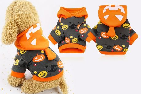 £5.99 instead of £19.99 for a Halloween pumpkin pets costume, choose from six sizes from YelloGoods – save 70%