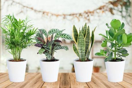 4 plantas de interior