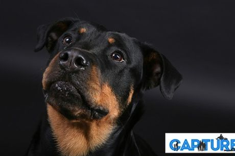 Pet Photoshoot by Capture, The Click Group