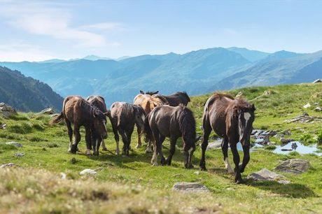 Andorra El Serrat - Hotel & Spa Xalet Bringué 4* desde 118,00 €. Precioso entorno natural con media pensión y acceso al spa