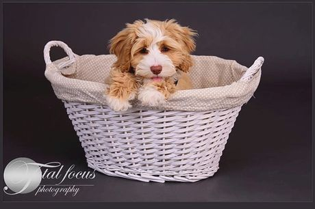 """£9 for a one-hour pet dog photoshoot with three 5"""" x 7"""" prints and a set of three keyrings from Total Focus Photography, Crossford"""