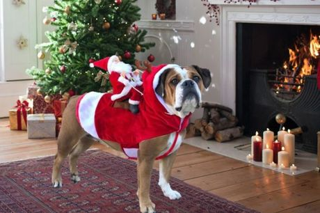 £12.99 for a dog Christmas outfit from hey4beauty