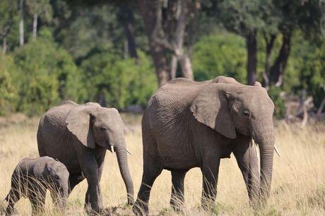 Kenia Nairobi - Circuito privado en Turkana, Kenia  desde 1.988,00 €. 8 noches con safaris y paseo en barco en el lago Naivasha