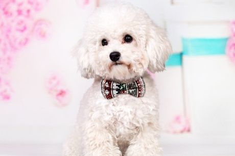 Christmas Bow-Tie Collar for Pets