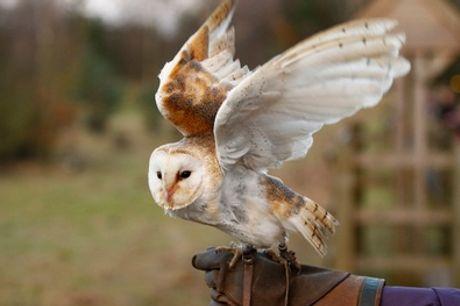 Roofvogelworkshop bij Settels Roofvogels in Bunschoten-Spakenburg