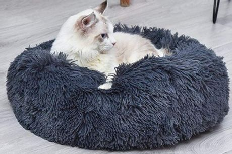 Cat and Dog Pet Bed