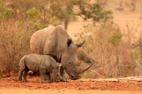 £19 for a one-year rhino adoption pack from the Born Free Foundation including a cuddly toy, certificate and more