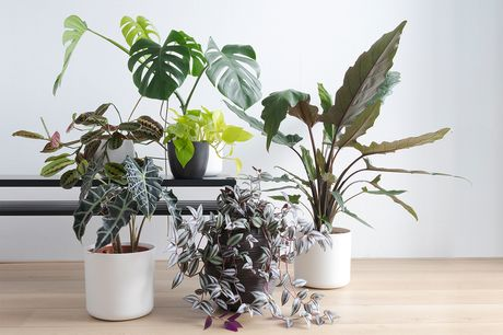 £5 for an online indoor plant care course from Alpha Academy!