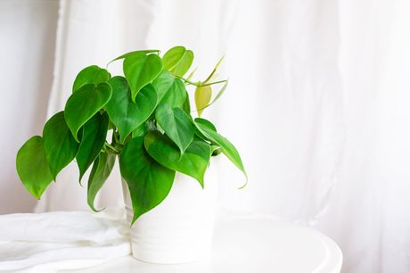 £15 for your first delivery of a houseplant subscription from The Hiden Collective including one houseplant in a ceramic pot or basket - with delivery included!