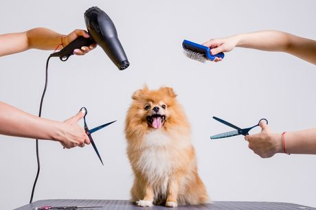 £10 for an online dog grooming, bathing and first aid course from Academy for Health & Fitness