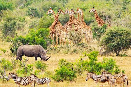 Schillernde Kontraste in Südafrika & Mauritius - Kostenfrei stornierbar, Krüger-Nationalpark, Johannesburg – Südafrika & Mauritius - save 28%