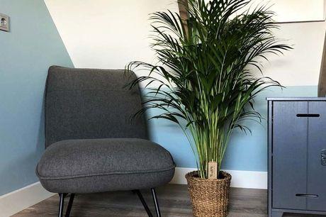 Luchtzuiverende goudpalm XL 100-110 cm hoog bij levering<br /> Smalle glanzende bladeren<br /> Plant is makkelijk te verzorgen